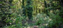 Orlas naturais dos bosques