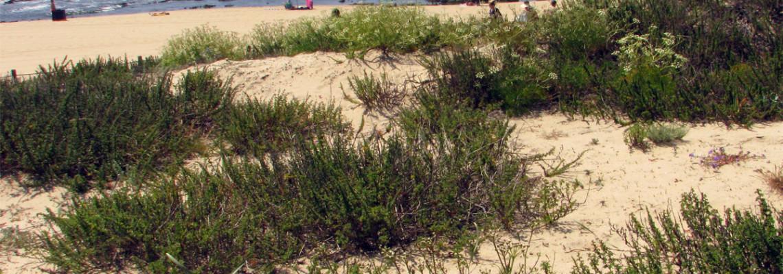 Habitats dunares