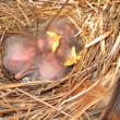 etorninhos-crias-jg.jpg