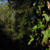 florest-5645.jpg