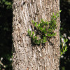 oliveira-tronco.jpg